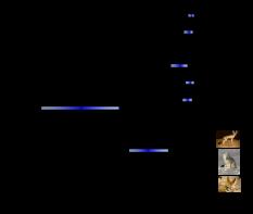 Fox_nuclear_tree